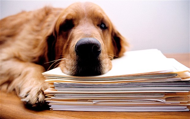depressed dog rests on files model released. Image shot 2006. Exact date unknown.