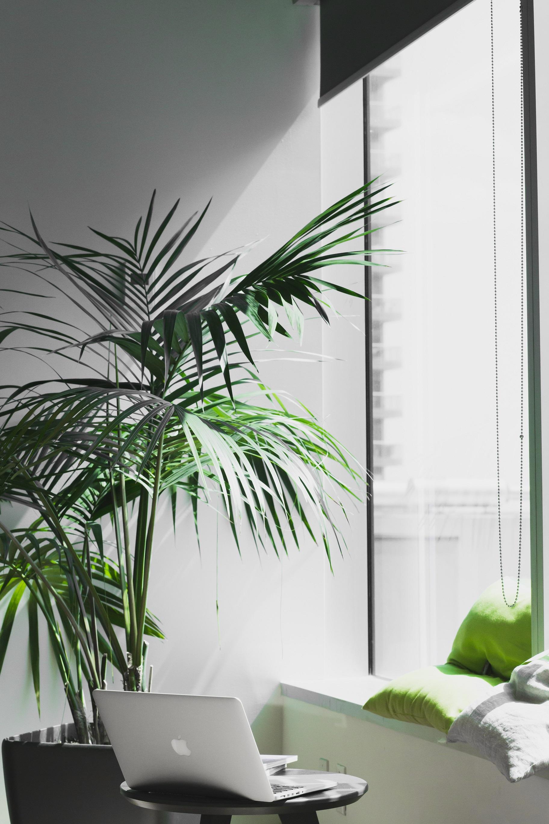 Büro mit Grünpflanze