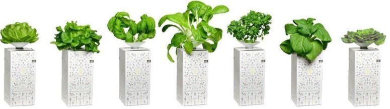 BottleCrop Beispielpflanzen